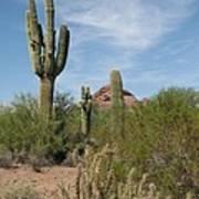 Desert Landscape With Saguaro Poster