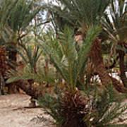 Desert Oase Camp Sinai Egypt Poster