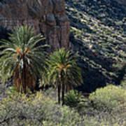 Desert Palms Poster