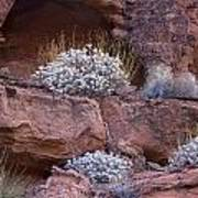 Desert Plant Life Poster