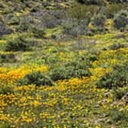 Desert Poppies Poster