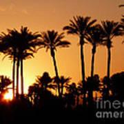 Desert Silhouette Sunrise Poster