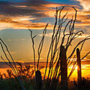 Desert Sunset Poster