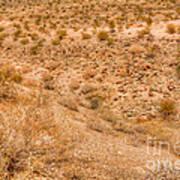 Desert Vista Poster