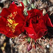 Desert Wildflowers Poster