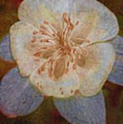 Designer Floral Poster