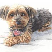 Desktop Calendar Yorky Dog Watercolor Portrait Poster