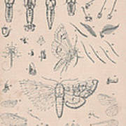 Details Of The Perfect Insect Poster