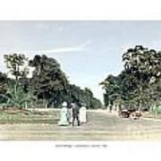 Detroit - Belle Isle Park - Central Avenue - 1905 Poster