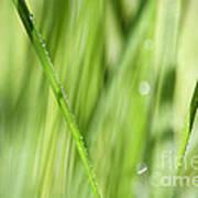 Dew Drops In Long Sunlit Grass Poster by Natalie Kinnear