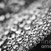 Dew Drops On Leaf Edge Poster