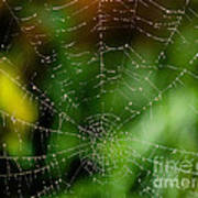 Dew Drops On Spider Web 3 Poster