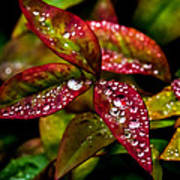 Dew On Autumn Leaves Poster
