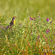 Dickcissel And Flowers Poster