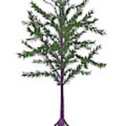 Dicroidium Prehistoric Seed Plant Poster