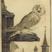 Die Schleyer Eule Poster