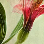 Dim Colours Poster