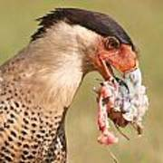 Dinner For A Caracara Poster