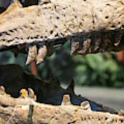 Dinosaur Jaws Exhibit Poster