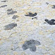 Dinosaur Tracks Poster