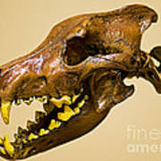 Dire Wolf Skull Fossil Poster