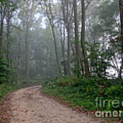 Dirt Path In Forest Woods With Mist Poster
