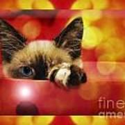 Disco Kitty 2 Poster