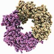 Dna Polymerase IIi Subunit Molecule Poster