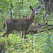 Doe A Deer Poster
