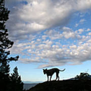 Dog And Sky Poster