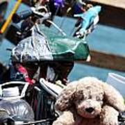 Dog Bike Poster