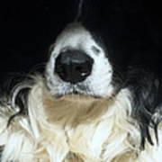 Dog Close Up Poster