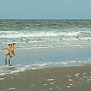 Dog Day Beach Poster