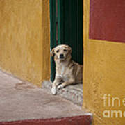 Dog In Colorful Mexican City Poster