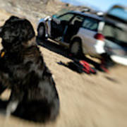 Dog In Front Of A Climbers Car Poster