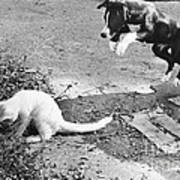 Dog Jumping On An Unsuspecting Kitten Poster