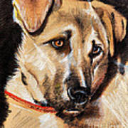 Dog Portrait Drawing Poster