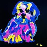 Dog-tibetin Lhasa Apsos Impression Poster