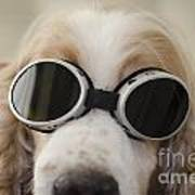 Dog With Eyeglasses Poster