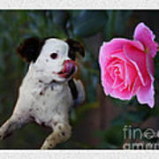 Dog With Pink Rose Poster