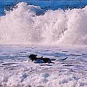 Dogs At Carmel California Beach Poster