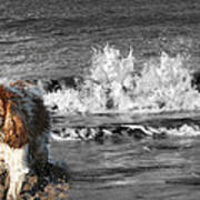 Dogs Enjoying The Sea Poster by Jo Collins