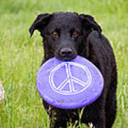 Dogs For Peace Poster