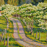 Dogwood Allee Poster