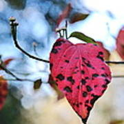 Dogwood Leaf - Red Leaf Falling With Watching Buds Poster