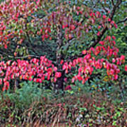 Dogwood Leaves In The Fall Poster