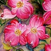 Dogwoods In Pink Poster