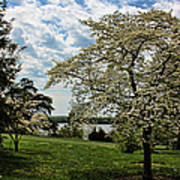 Dogwoods In Summer Poster