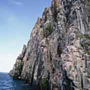 Dolomite Cliff With Guillemot Colony Poster