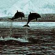 Dolphin Pair-in The Air Poster